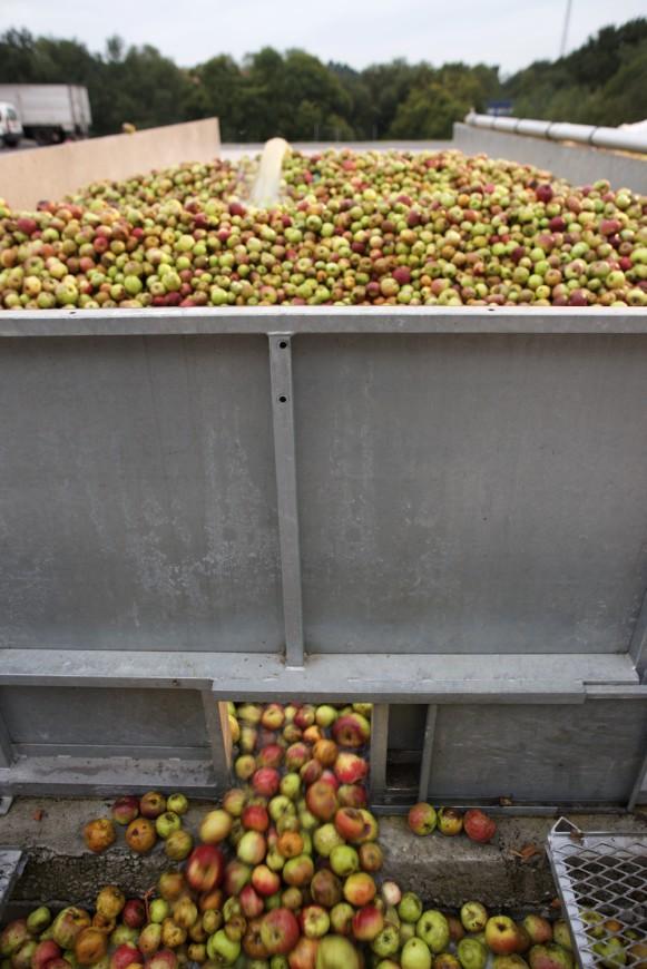 Manzanas de Sidra en el Llagar Castañón